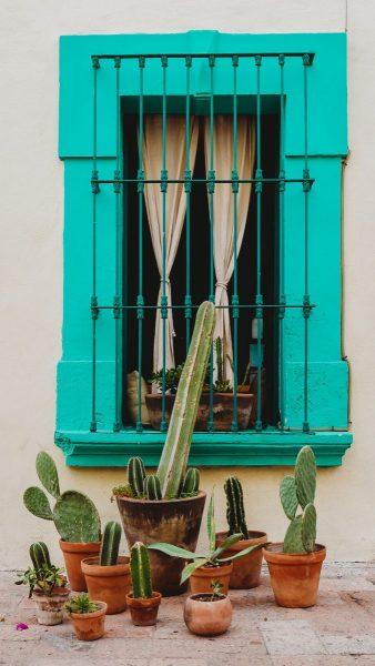 Decoración mexicana con cactus