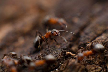 Eliminar hormigas en el hogar