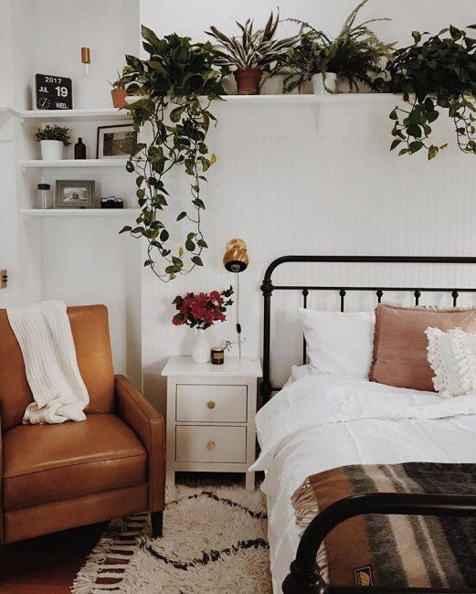 Plantas sobre el cabecero de la cama